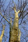 Stromy shora - ideální místo pro načerpání nové energie na další překlady...